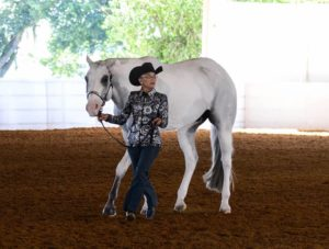 "Abbey Turner shows ""HR Zip Me"" at this year's Pinto World Show in Tulsa, Oklah. (Photo by Melinda Davison)"